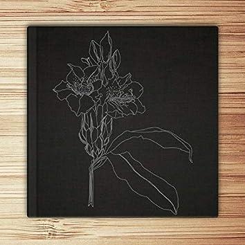 Cuadernos Sonoros