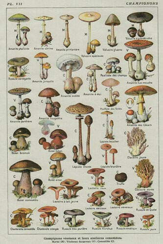 Eeypy Mushroom Poster Chart Education Fungus Botany Metal Tin Sign Different Breeds Retro Vintage Farm Courtyard Garden Animal Tin Signs Plate Plaque Novelty Restaurant Kitchen Wall 8x12 Inch