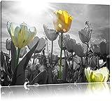 wunderschöne Tulpenwiese schwarz/weiß Format: 80x60 auf Leinwand, XXL riesige Bilder fertig gerahmt mit Keilrahmen, Kunstdruck auf Wandbild mit Rahmen, günstiger als Gemälde oder Ölbild, kein Poster oder Plakat