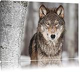 Pixxprint Wachsamer Wolf Format: 80x60 auf Leinwand, XXL