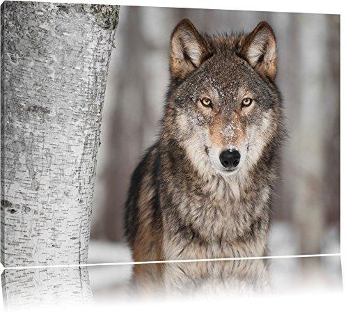 Pixxprint Wachsamer Wolf Format: 100x70 auf Leinwand, XXL riesige Bilder fertig gerahmt mit Keilrahmen, Kunstdruck auf Wandbild mit Rahmen, günstiger als Gemälde oder Ölbild, kein Poster oder Plakat