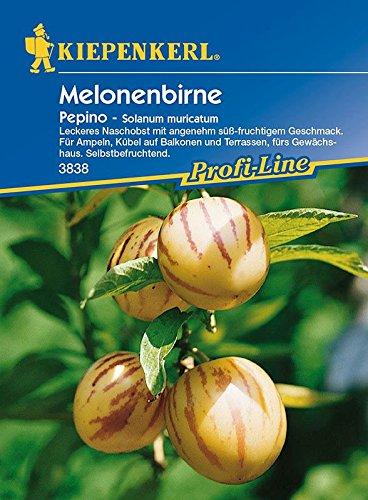 Solanum: Melonenbirne 'Pepino', Solanum muricatum - 1 Portion