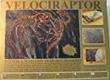 Kristal Educational Expedition CL: Large Velociraptor / Protoceratops Duel