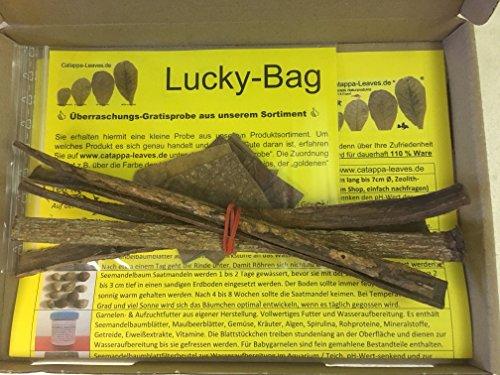 Catappa Barks 5x20cm (25 Gramm) original A-Markenware von Catappa-Leaves - BLITZVERSAND - Catappa Bark Nano Rinde + Gratisprobe aus unserem Sortiment