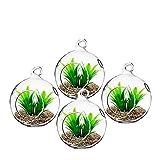 Padmashri Hanging Glass Globe Plant Terrariums - Glass Orbs Air Plants Tea Light