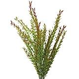 Sunflower-Design Klebsamenbusch Kunstpflanze Klebsamen grün-gelb 61cm