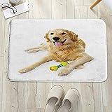 Alfombra de baño, Alfombrilla de baño de microfibra,Golden Retriever, perro mascota acostado con Toy Friendly Puppy Domes, antideslizante, absorbente, lavable, para cuarto de baño, salón (60 x 100 cm)