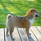 L Pet supplies Se Trata de una Cuerda de tracción para Mascotas de la Cadena Shiba Inu P integrada. La Cadena de hiena Akita integrada Puede ajustarse.
