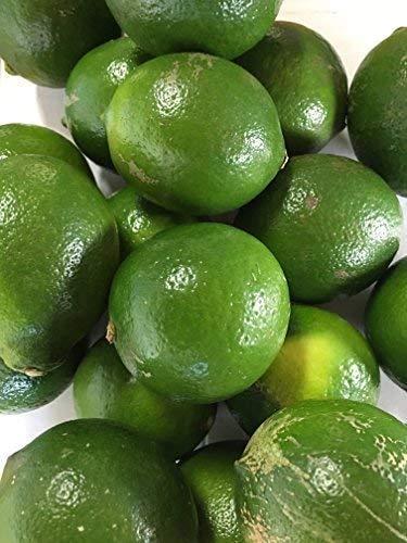 わけあり品 農薬・防腐剤・防カビ剤不使用 ノーワックス レモン 5kg  熊本産 無農薬