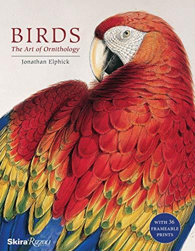 BIRDS [Idioma Inglés]