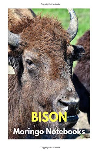 Bison: Notebooks with Animals for Kids, Notebook for Writing and Drawing (Colorful & Cartoon Cover, 110 Pages, Blank, 6 x 9) (Animal Notebook)