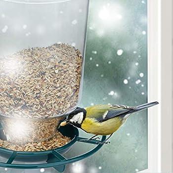 Relaxdays, transparent Mangeoire à oiseaux, Distributeur de graines, ventouse fenêtre, balcon, plastique, vert Adulte unisexe, 22,5 x 14 x 10,5 cm