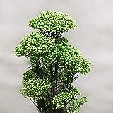 TJYEDUW Ramos de flores de mijo inmortal natural de 30 a 45 cm, para decoración del hogar, decoración de bodas y fiestas (color verde, tamaño: 40 55 cm (30 g)