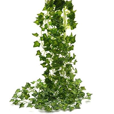 clematis vine plant