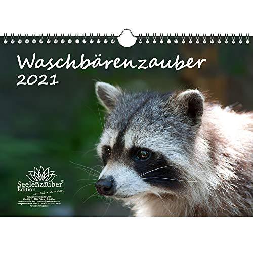 Waschbärenzauber DIN A4 Kalender für 2021 Waschbären - Geschenkset Inhalt: 1x Kalender, 1x Weihnachts- und 1x Grußkarte (insgesamt 3 Teile)