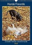 Hunde Freunde (Wandkalender 2020 DIN A4 hoch): Ein Golden Retriever und seine Hundefreunde (Planer, 14 Seiten ) (CALVENDO Tiere)