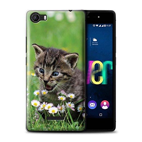 Stuff4 Hülle/Case für Wiko Fever 4G / Inländisches Kätzchen/Blumen Muster Katze/Katzenrassen Kollektion