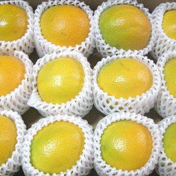 和歌山県産 バレンシアオレンジ 2L/3Lサイズ(11〜12個)【化粧箱入り】