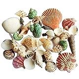BAN SHUI JU MINSU GUANLI 120g Natural Turbo Seashell Sea Conch Ermitaño Cangrejo Casa Acuario Conchas Artesanías Decoraciones Decoración de Acuarios y Peceras