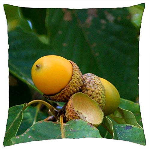 LESGAULEST Throw Pillow Cover (24x24 inch) - Acorn Cluster Oak Seed Nut Green Leaf Beginning