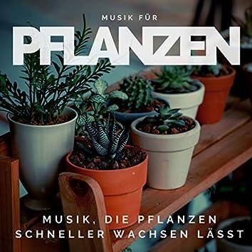 Musik für Pflanzen – Musik, die Pflanzen schneller wachsen lässt