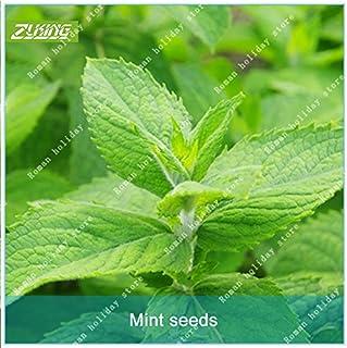 ZLKING Semilla 100pcs menta de la lanza de la planta comestible hierba gatera Fácil GrowFor Inicio Jardín Bonsai