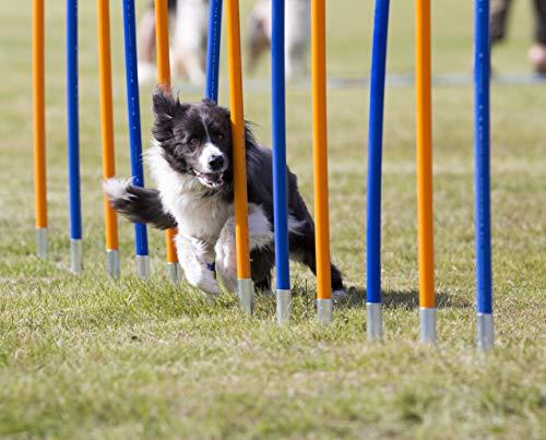 Diggar Agility-Training für Hunde Slalom Tunnel Sprungring Hürde Hundesport Training Reifen Hürde (Slalomstangen)