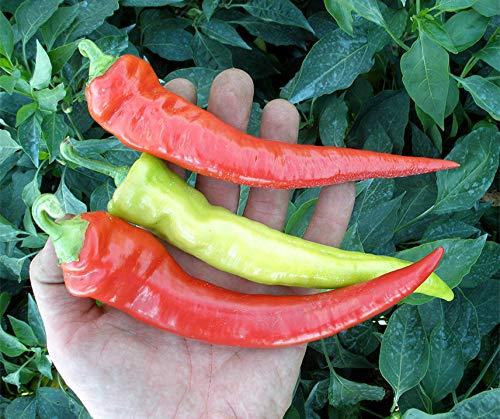 Bobby-Seeds Chili- Peperonisamen Semaroh Pepperoni, mild Portion