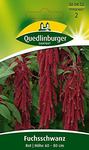 Fuchsschwanz Rot von Quedlinburger Saatgut