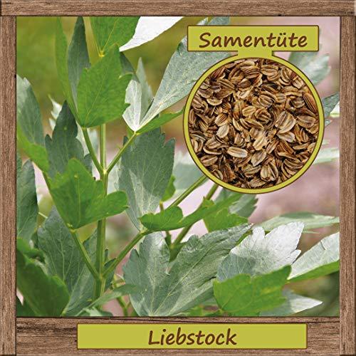 Hochwertige Liebstock-Samen Saatgut mehrjährig aus natürlichem Anbau Herkunftsland Deutschland