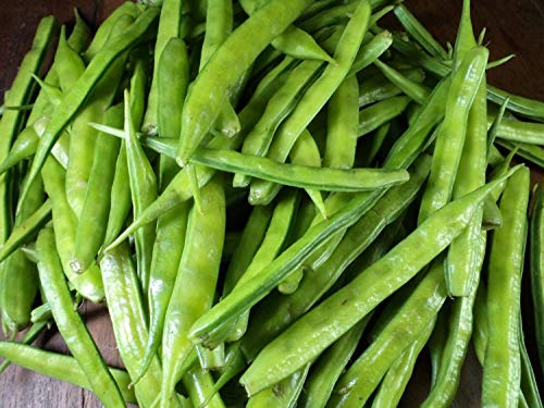 Indian Cluster Bean Seeds (25 Seed Pack)