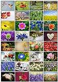 32 Grußkarten Blumen Klappkarten mit 32 Umschlägen Blumen & Garten