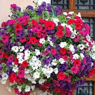 Cutdek 8000+Dwarf Petunia Mix Flower Seeds Garden/Containers Hanging Baskets Window Box