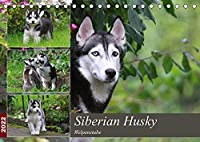 Siberian Husky - Welpenstube (Tischkalender 2022 DIN A5 quer): Siberian Husky mit Welpen spielend im Garten (Monatskalender, 14 Seiten )