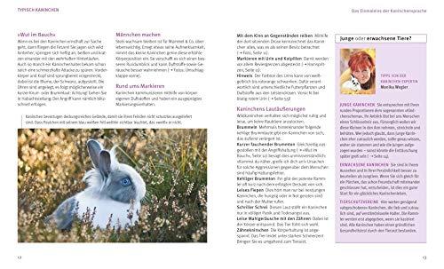 Kaninchen im Außengehege: Pures Frischluft-Vergnügen - 5