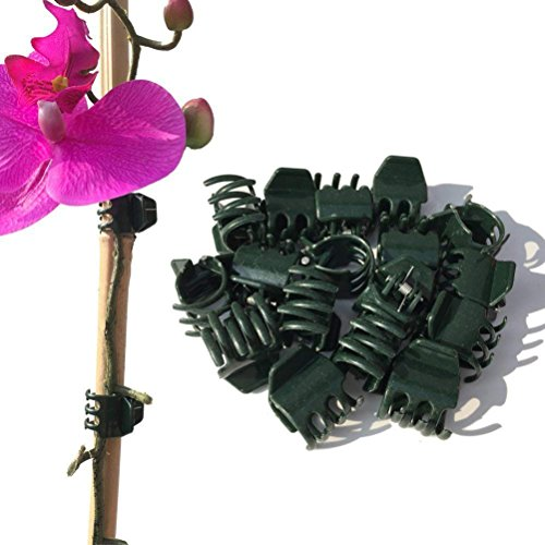 Vtete 50 PCS Large Size Orchid Clips and Garden Support Clips Green (Not with Flower and Plant Spike)