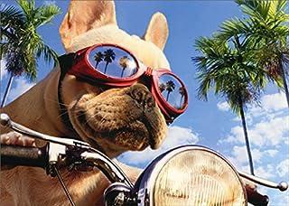 Motorcycle Chopper Dog Avanti Humorous/Funny Birthday Card