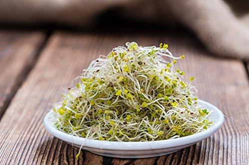 BIO - Graines pour germer du brocoli - semences certifiées biologiques - 3000 graines