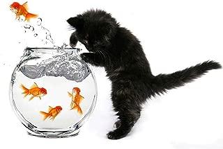 Wee Blue Coo Black Kitten Cat Goldfish Bowl Unframed Wall Art Print Poster Home Decor Premium