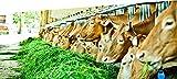 Zoom IMG-1 i sapori delle vacche rosse
