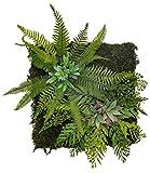 maia shop giardino verticale, ideale per la decorazione della casa, progettazione dello spazio, albero, fiore, pianta artificiale (40x40 cm)