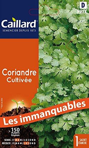 Caillard PFCC12445 Graines de Coriandre Cultivée