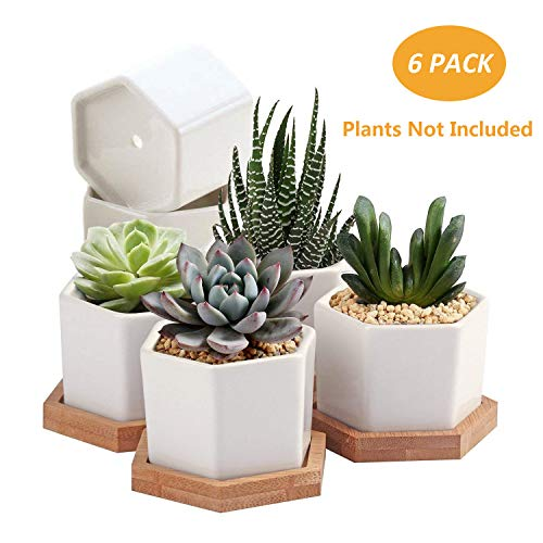 OAMCEG Succulent Plant Pots, 2.75 inch Mini Succulent Planter, Set of 6 White Ceramic Succulent Cactus Planter Pots with Bamboo Tray(Plants NOT Included)