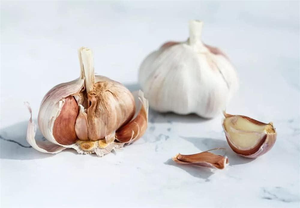 Garlic Max 67% OFF Bulbs Popular Seasons Fresh Product Edible Outd Mild