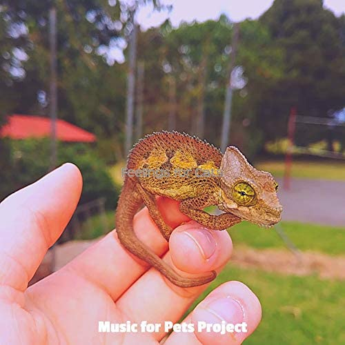 Music for Pets Project