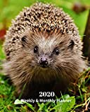 2020 Weekly and Monthly Planner: Hedgehog - Monthly Calendar with U.S./UK/ Canadian/Christian/Jewish/Muslim Holidays– Calendar in Review/Notes 8 x 10 in.-Wildlife Animals Nature