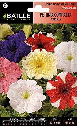 Semi di Fiori – Petunia compatta assortita – Batlle