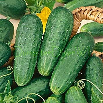 VISA STORE Hausgemachte Pickles Pickle 35+ Samen Bio-Non-GMO Extra-Productive e
