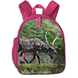 Travel Backpacks For Middle Schools - Best Reviews Guide