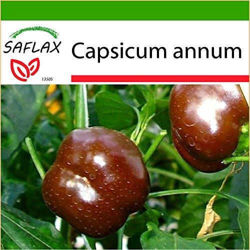 SAFLAX - Paprika - Sweet Chocolate X - 10 graines - Avec substrat - Capsicum annum